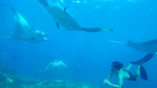 freedive-with-manta-rays-lembongan