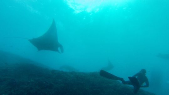 freediving-with-manta-rays-lembongan