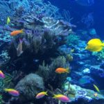 best of bali reef