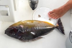 jacket fish bali spearfishing