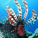 lion fish snorkeling tour