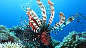lion fish snorkeling tour