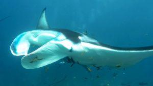 manta lembongan snorkeling trip