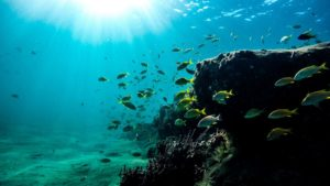 awesome fishes while your freediving course in indonesia