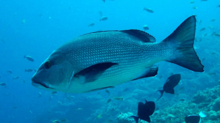 Picture of SPEARFISHING TRIP CORAL FISH